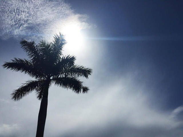 Blue Sky Palm in Boca Raton Florida