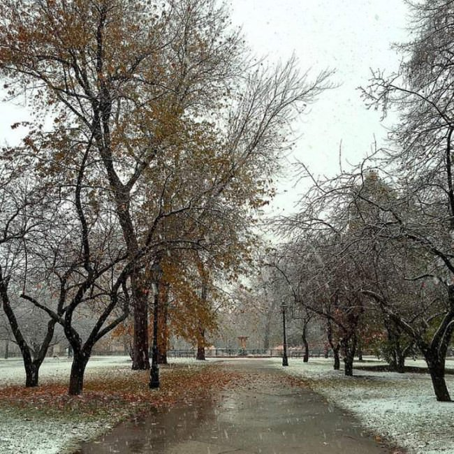 First Snow in the Park Chicago