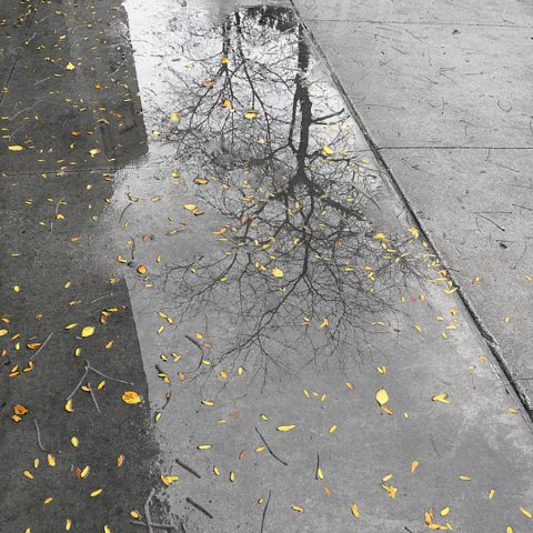 Chicago Golden Leaves Fallen After Rain